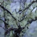 Dew drops on Lower Table Rock Trail