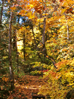 Lithia Park in Fall