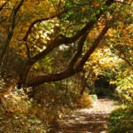Lithia Park trail in Ashland, Oregon