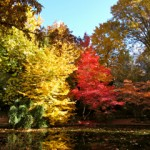 Duck Pond in Lithia Park