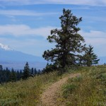 Pacific Crest Trail and Mt. Shasta