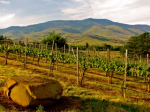 Things to do in Ashland Oregon Ashland Winery image