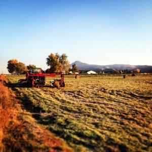 Ashland Farm